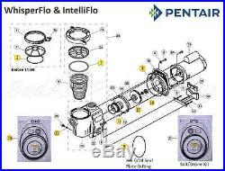 Pentair WhisperFlo, IntelliFlo #100 COMPLETE Pump O-Ring Rebuild Kit